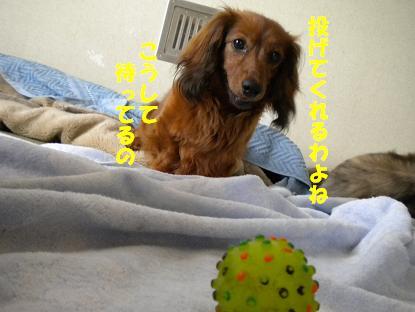 犬 031-1