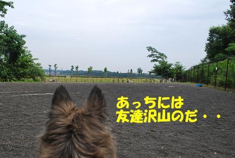 犬 071-2