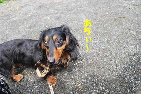 犬 070-2
