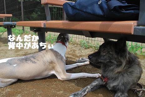 犬 084-2