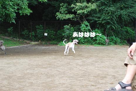 犬 080-2