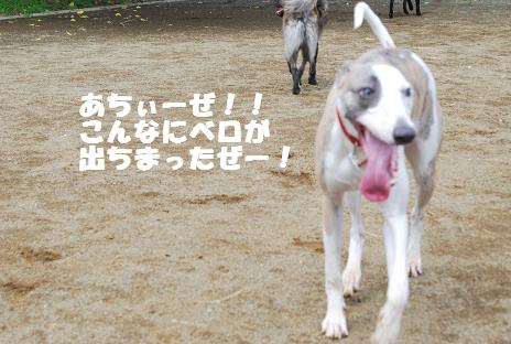犬 083-2