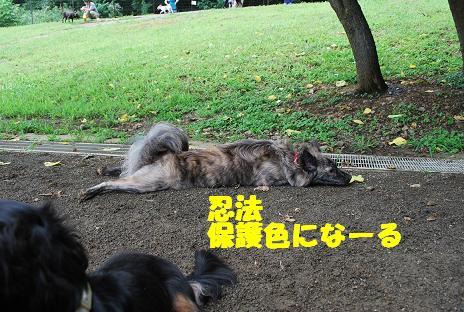 犬 100-2