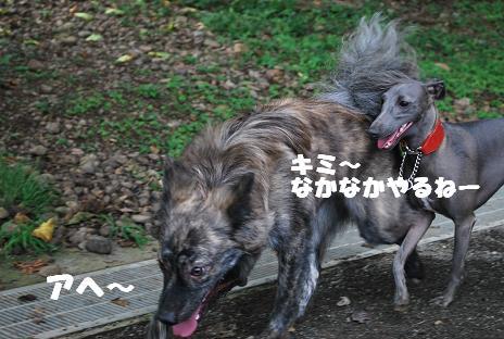 犬 099-2