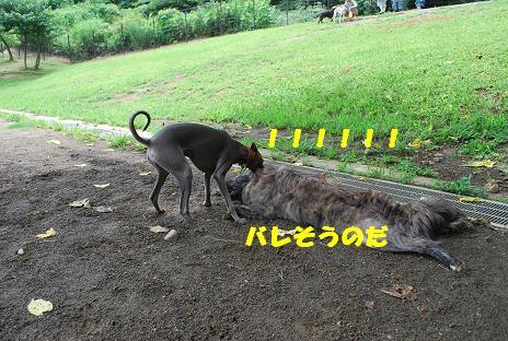 犬 104-2