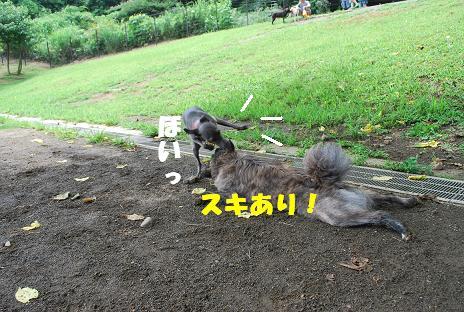 犬 102-2
