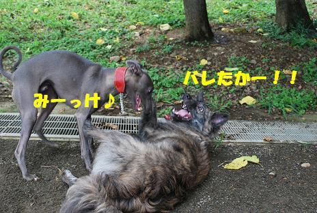 犬 101-2