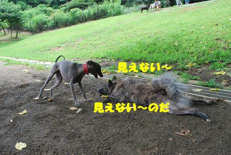 犬 103-2
