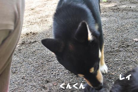 犬 088-2