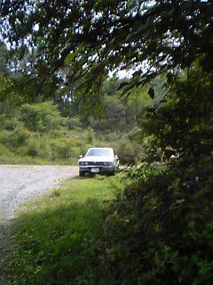 ルーチェと森林