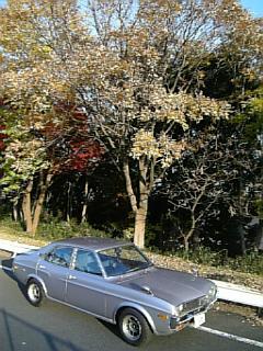 マツダルーチェと落葉した木