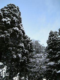 雪をかぶった木々