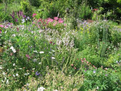とっても綺麗な庭
