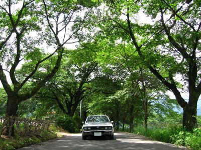 ルーチェと梅雨の桜並木0005