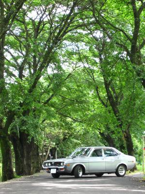 ルーチェと梅雨の桜並木0001