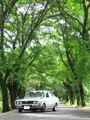 ルーチェと梅雨の桜並木0002