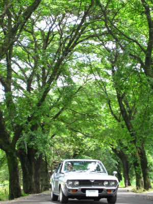 ルーチェと梅雨の桜並木0003