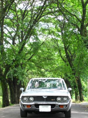 ルーチェと梅雨の桜並木0004