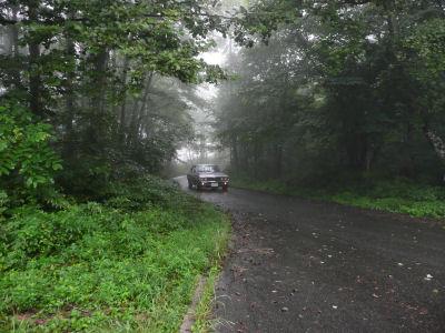 ルーチェと霧の中