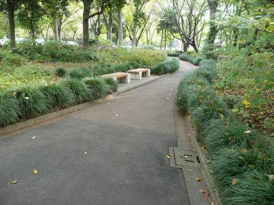落葉が綺麗に掃かれている中央公園