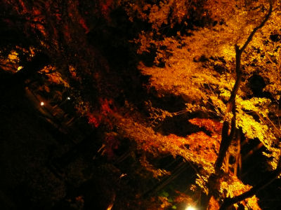 吾野東郷公園もみじまつりの紅葉