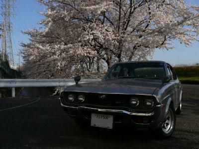 ルーチェと桜を撮る