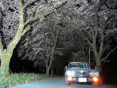マツダルーチェと夜の桜並木