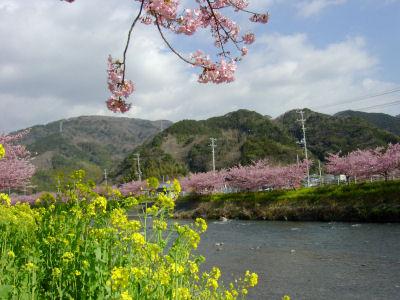 春だ~!!!
