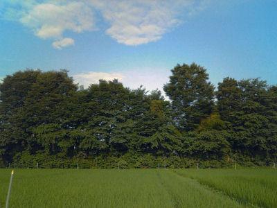 '07年7月末の田圃