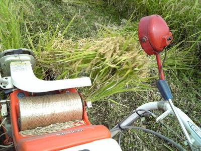 これ、稲藁がバインダーから吐き出される様子