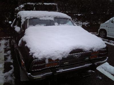 雪をかぶったルーチェの後姿