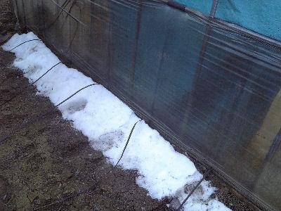 ハウス北側に残る雪
