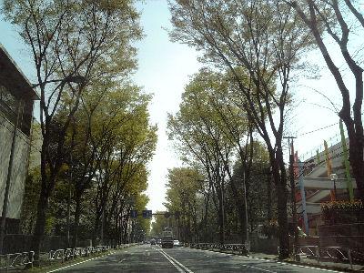 春の甲州街道