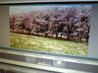 桜並木を走るルーチェ