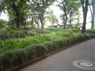 新緑の中央公園
