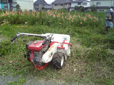 ハンマーモア、草ぼうぼうに挑む