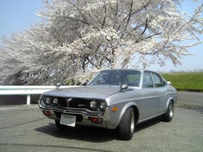ルーチェと桜