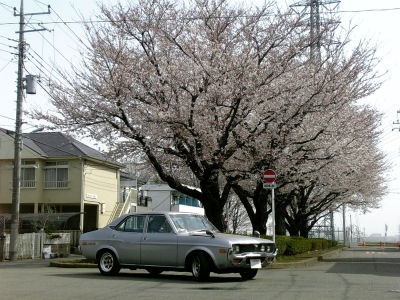 桜とルーチェ