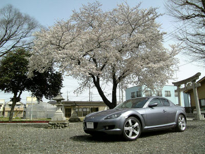 桜とRX-8