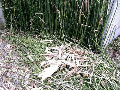 爪とぎ草を刈る
