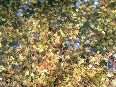 池の中のもみじの葉っぱ