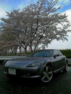 RX-8と桜'07