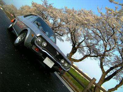 桜とマツダルーチェ'07