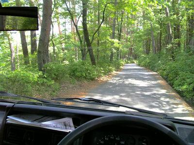 森林ドライブ
