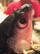 """"""" グルクン """"というお魚です。"""