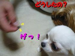 2_20080621200226.jpg