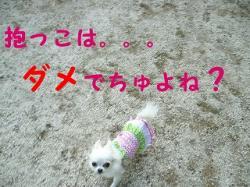 PHOTO007ggg.jpg