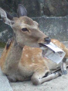 grumpy_deer