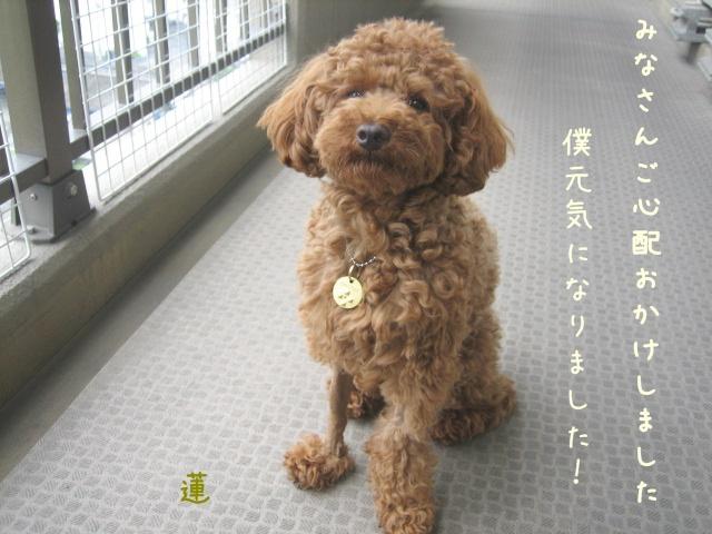 IMG_0254れn