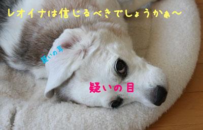 5_20080813151601.jpg